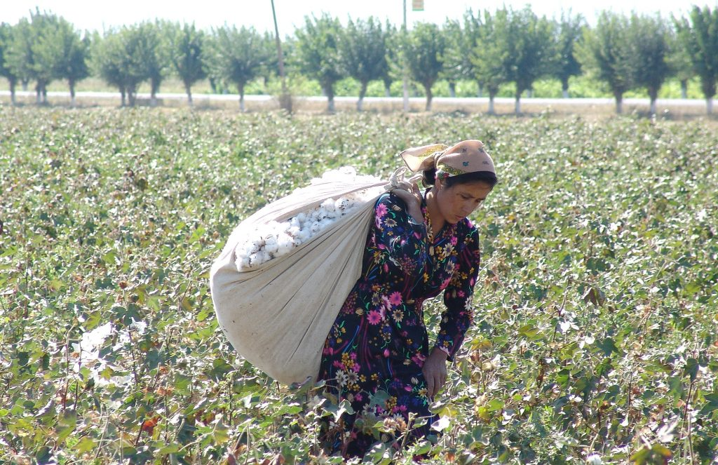 European Parliament prepares to ease imports of Uzbek cotton and textiles
