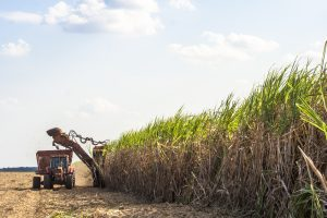 Sugar: EU beets won't take Brazil cane beating