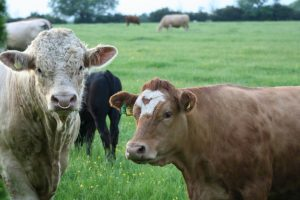 EU Mercosur: Commission and eight member states persist in ethanol and beef row