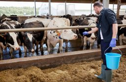 Insight: How animal welfare is climbing up the agenda of EU trade policy