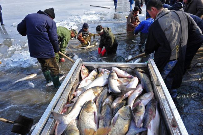 WTO: Fishing for a small deal in Buenos Aires