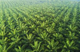 Comment: Palm and soybean oil phaseout will test EU environmental objectivity