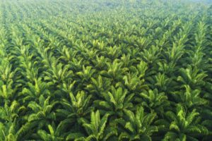 EU palm oil plans crop up in WTO