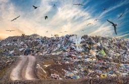 EU trashes Chinese standards on foreign waste
