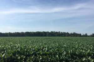 Commission decision on US soy comes in handy for biodiesel producers