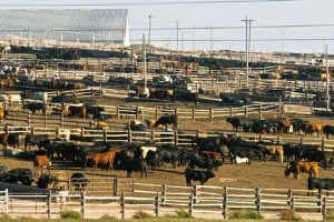 EU and US TRQ deal leaves less beef for others