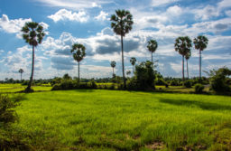 The Cambodia Rice Federation has filed a case with the Court of Justice of the EU in Luxembourg