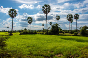 Trees in Cambodian rice fields © MarPa87