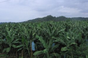 One of the most sensitive items is the substance thiabendazole, used in banana plantations