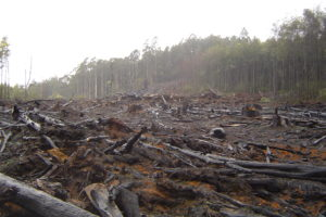 Deforestation of the Amazon forest