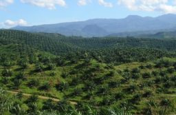 Jakarta has mandated trade lawyers to get onto a possible World Trade Organization case regarding palm oil