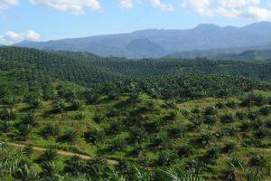 View of palm oil plantation © a_rabin