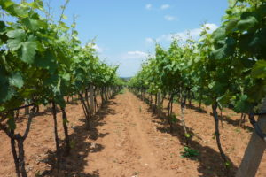 US products affected by limits to pesticide residues would include wine grapes