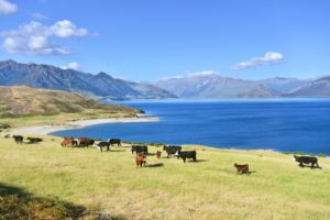 EU unveils initial offer for New Zealand dairy products