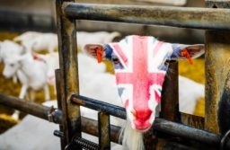 Trade and agriculture commission created amidst rising concerns over future UK standards