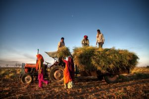 India invokes public stockholding peace clause amidst raging post-COVID farm subsidy debate