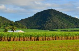 Australia stakes claim for tariff-free access to UK market